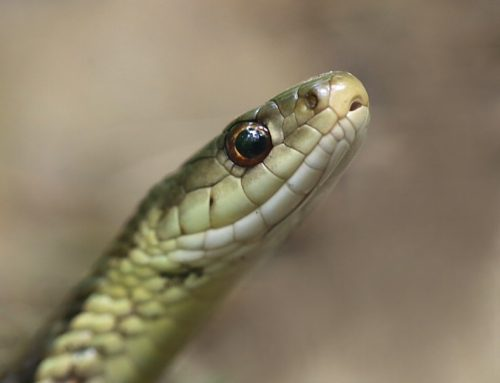Snakes Alive!  Derby Telegraph article about my worst home nightmare discoveries!
